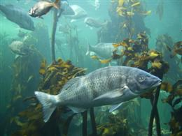 Kelp tank at the Two Oceans